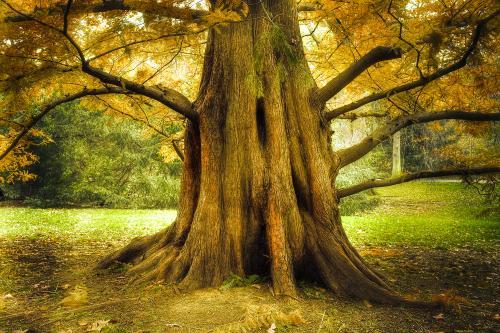 Miniatuurweergave voor booms.jpg