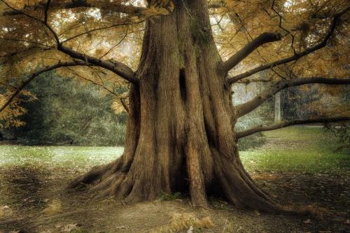 Miniatuurweergave voor tree.jpg